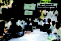 अखिल भारतीय ब्रह्मर्षि समाज ने मनाया प.रामप्रसाद बिस्मिल का जन्मदिवस