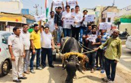 युवक कांग्रेस ने भैंसा बुग्गी पर बैठ किया केंद्र सरकार के खिलाफ प्रदर्शन